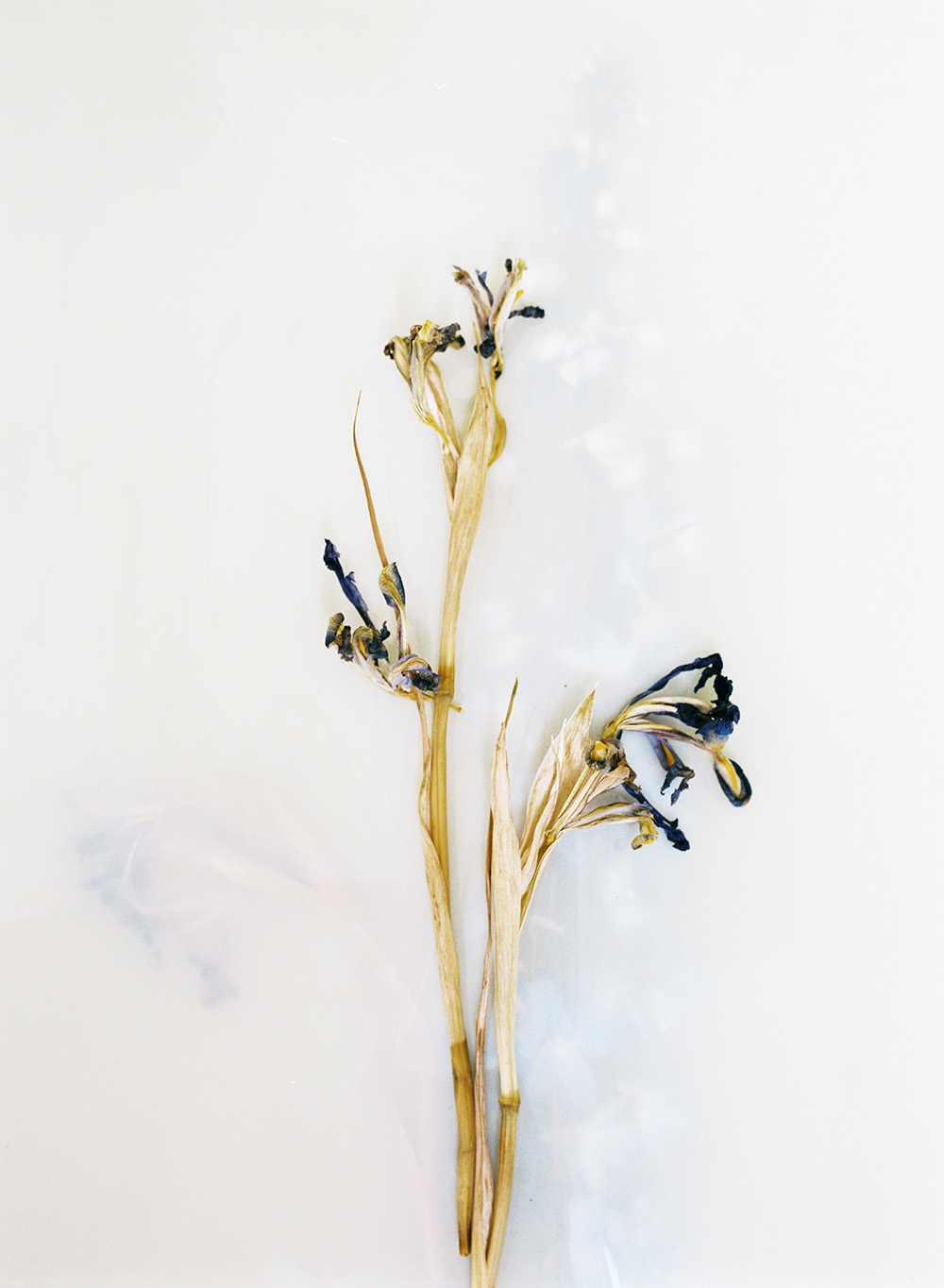 Lou-flowers-1